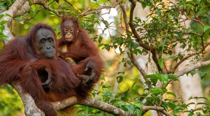 What's the issue with Palm Oil?